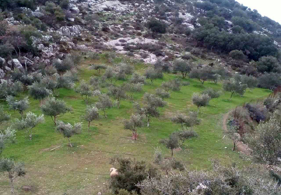 Land for sale in Anogia village